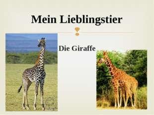 Die Giraffe Mein Lieblingstier 