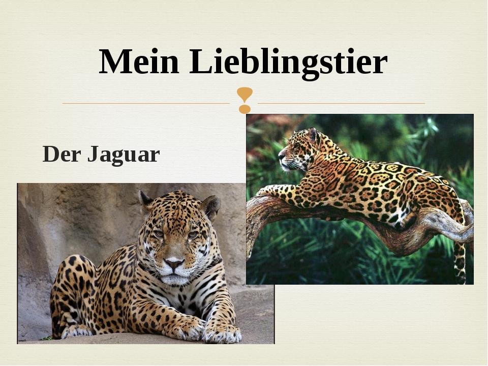 Der Jaguar Mein Lieblingstier 
