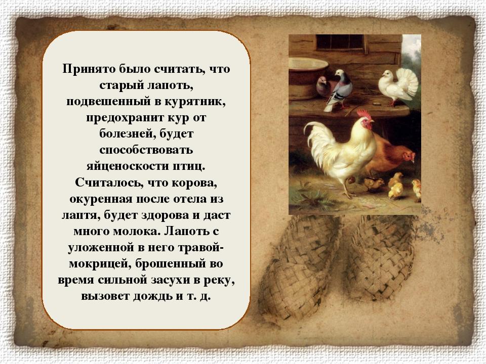 Принято было считать, что старый лапоть, подвешенный в курятник, предохранит...