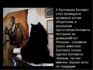 У Булгакова Бегемот стал громадных размеров котом-оборотнем, а реальным прото