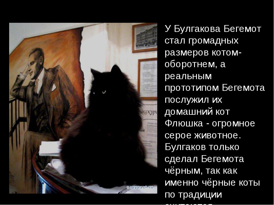 У Булгакова Бегемот стал громадных размеров котом-оборотнем, а реальным прото...