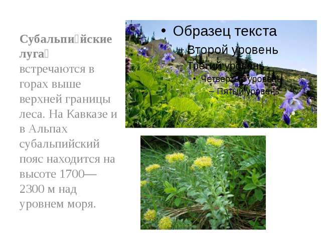 Субальпи́йские луга́ встречаются в горах выше верхней границы леса. На Кавказ...