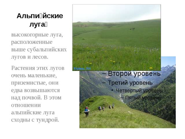 Альпи́йские луга́ высокогорные луга, расположенные выше субальпийских лугов и...