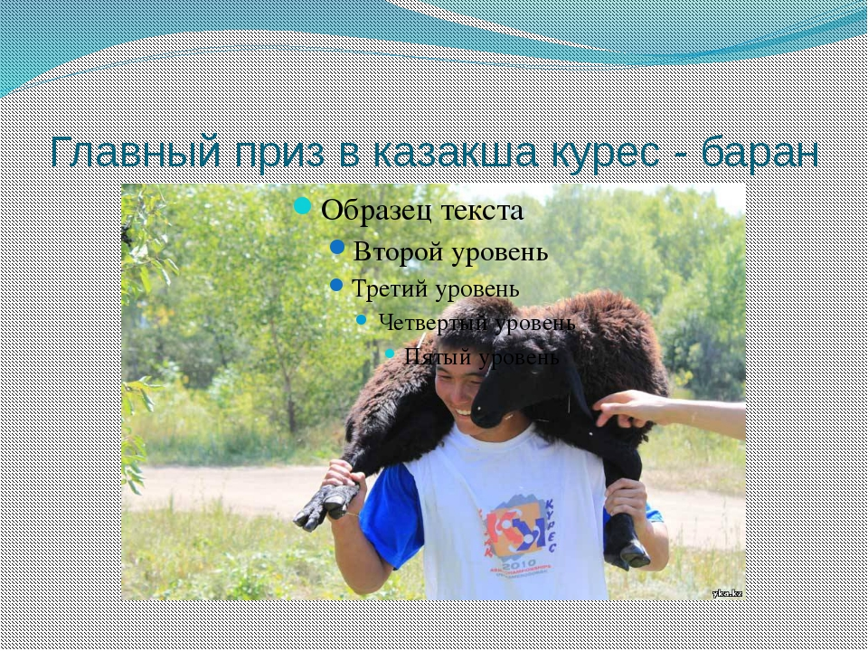 Главный приз в казакша курес - баран