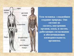 Тело человека- сложнейшее создание природы. Оно состоит из скелета, внутренни