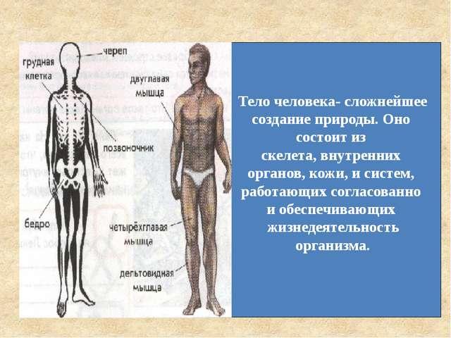 Тело человека- сложнейшее создание природы. Оно состоит из скелета, внутренни...