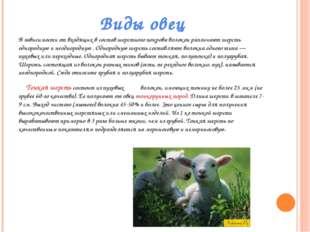 Виды овец В зависимости от входящих в состав шерстного покрова волокон различ