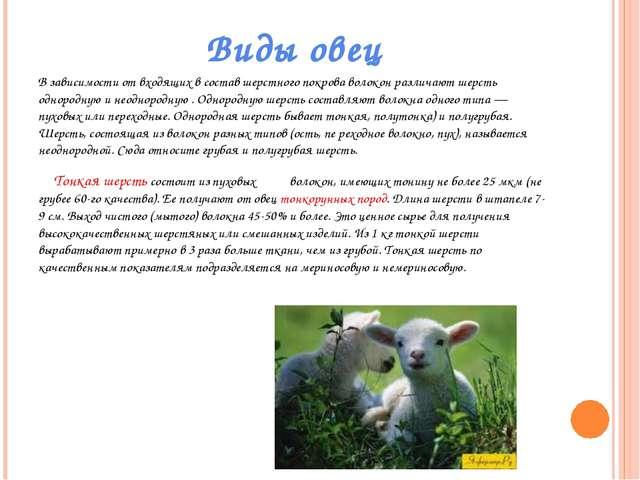 Виды овец В зависимости от входящих в состав шерстного покрова волокон различ...