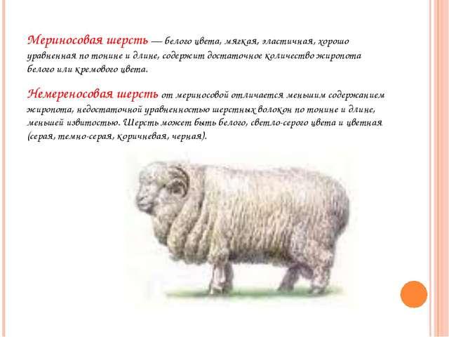 Мериносовая шерсть — белого цвета, мягкая, эластичная, хорошо уравненная по...