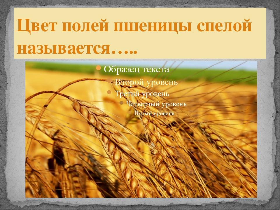 Цвет полей пшеницы спелой называется…..