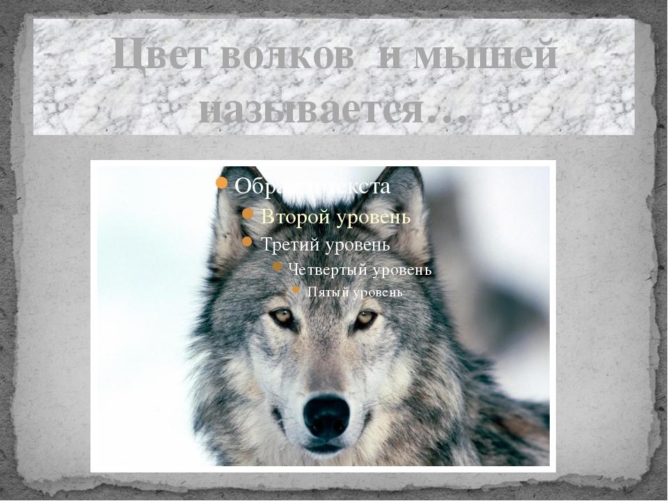 Цвет волков и мышей называется…
