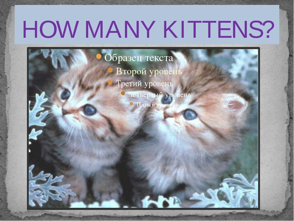 HOW MANY KITTENS?