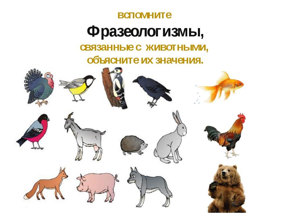 вспомните Фразеологизмы, связанные с животными, объясните их значения.