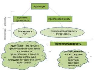 Адаптации Признаки организмов Приспособленность Различают Выживание в БЗС Кон