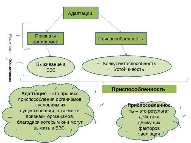 Адаптации Признаки организмов Приспособленность Различают Выживание в БЗС Кон...