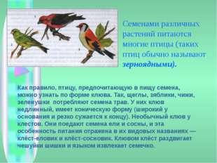 Семенами различных растений питаются многие птицы (таких птиц обычно называю