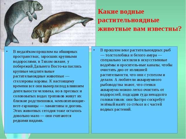 Какие водные растительноядные животные вам известны? В недалёком прошлом на о...
