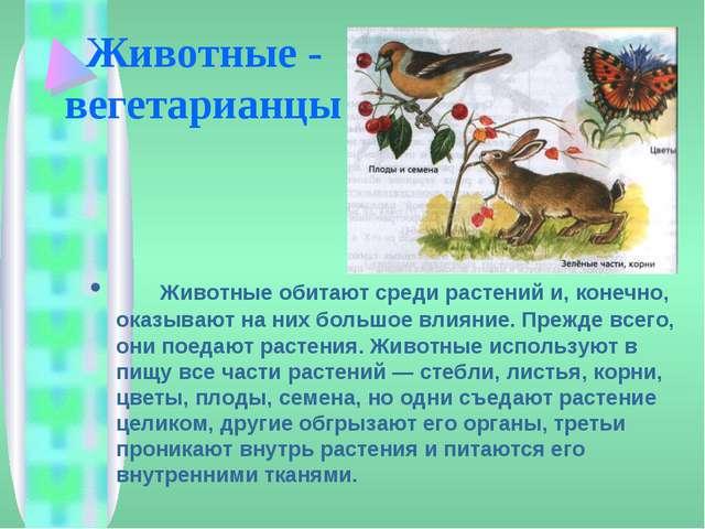Животные - вегетарианцы Животные обитают среди растений и, конечно, оказываю...