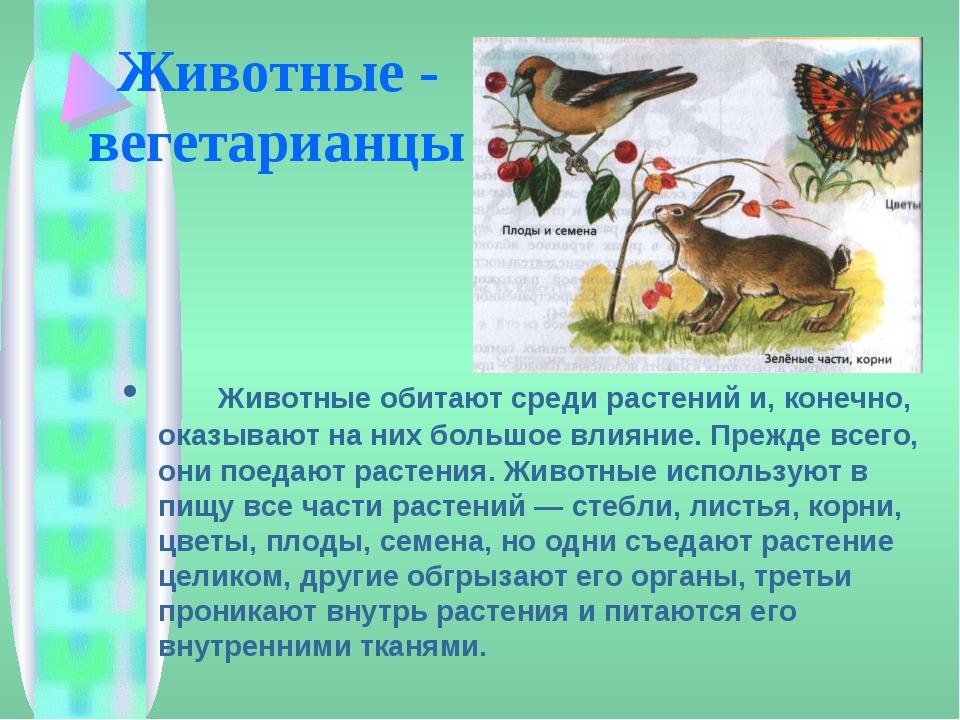 Растения в жизни животных в картинках