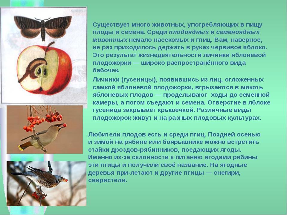 Существует много животных, употребляющих в пищу плоды и семена. Среди плодоя...