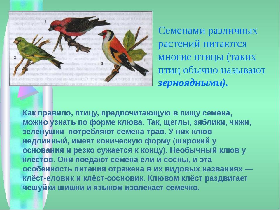 Семенами различных растений питаются многие птицы (таких птиц обычно называю...