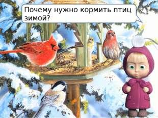 Почему нужно кормить птиц зимой?