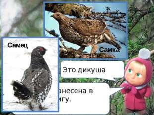 Эта птица занесена в Красную книгу. Кто она? Это дикуша Самка Самец