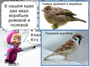 Ребята, сейчас я расскажу вам каких птиц можно встретить в нашем дворе Чик –