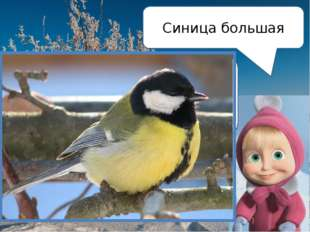 Синяя косынка, Темненькая спинка. Маленькая птичка. Звать её ... Синица большая