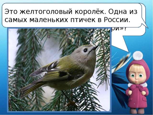 Ребята, а какую из наших зимующих птичек можно смело назвать «российской коли...