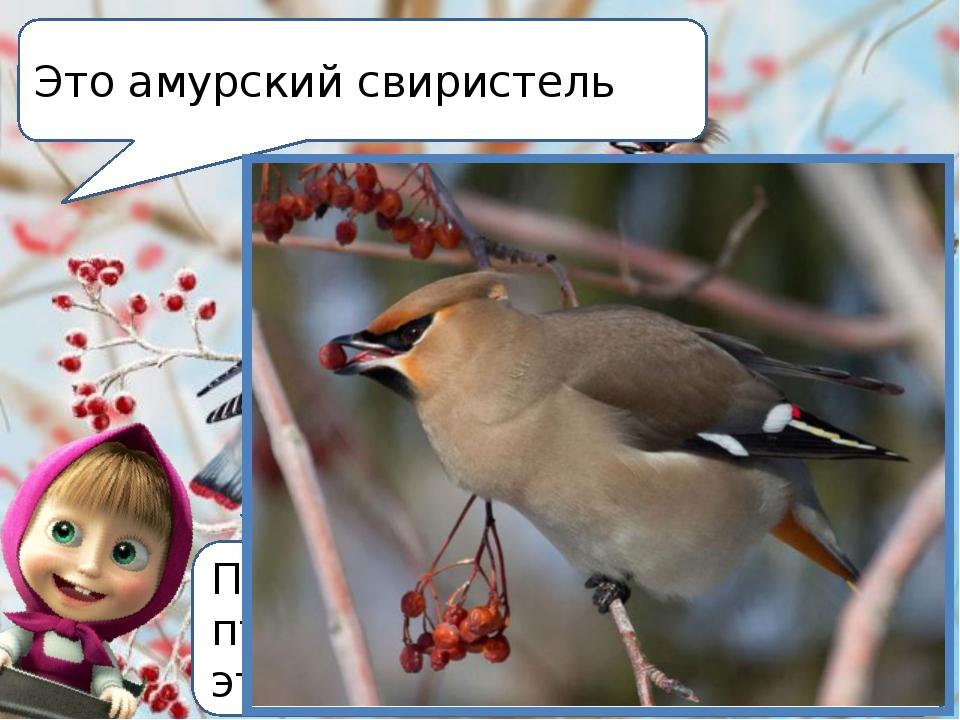 Посмотрите, в народе этих птиц называют «красава», что это за птица? Это амур...