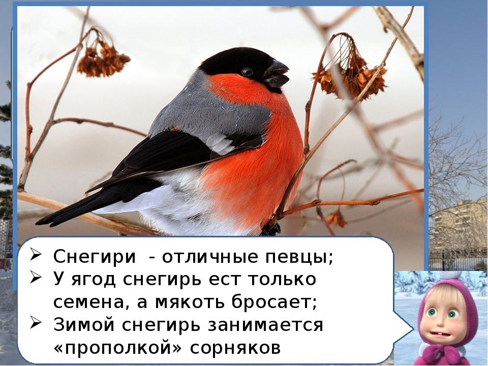Прилетели на зимовку птицы, Что в морозы ловко Скачут по деревьям, веткам В к...