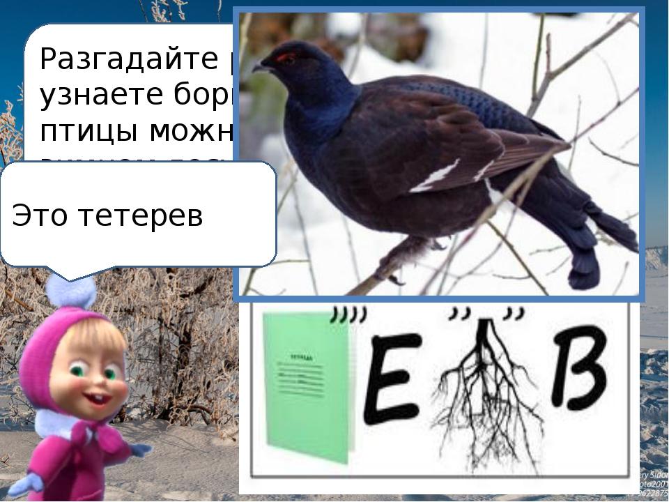 Разгадайте ребус и узнаете бормотание какой птицы можно услышать в зимнем лес...