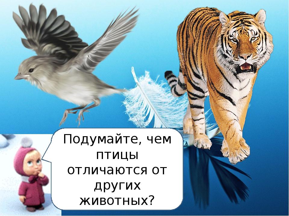 Подумайте, чем птицы отличаются от других животных?