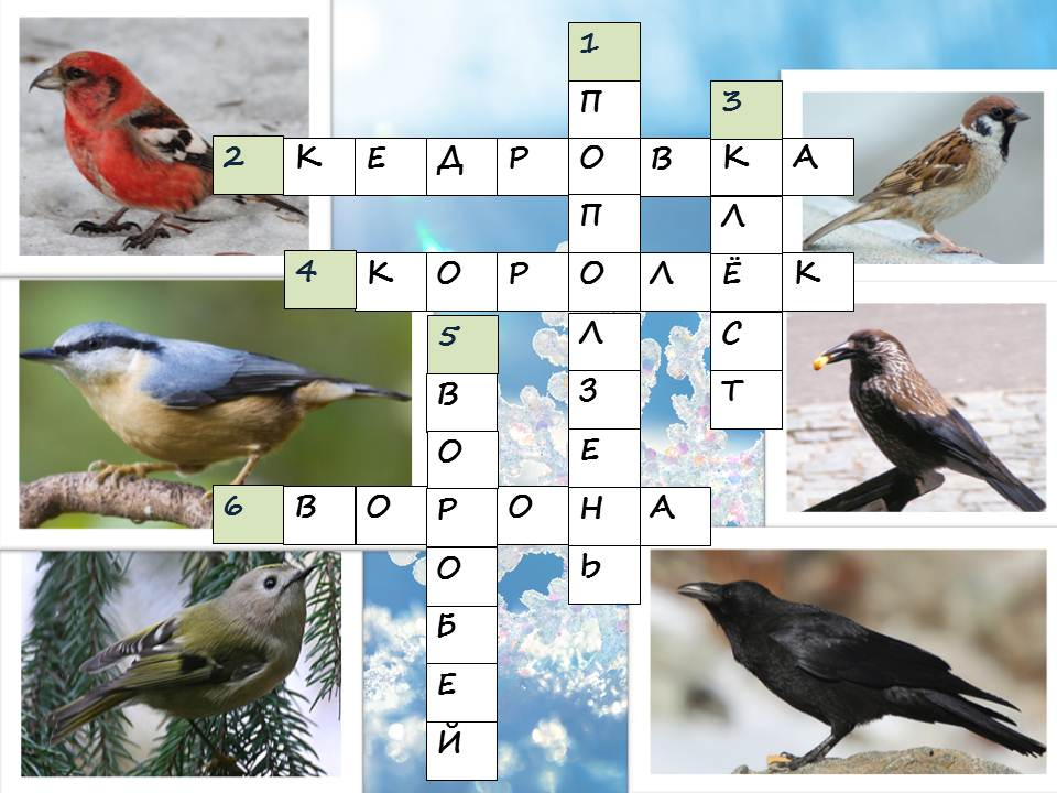C:\Users\Canis\Desktop\зимующие птицы Хабаровского края.jpg