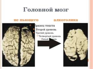 Головной мозг не пьющего  алкоголика
