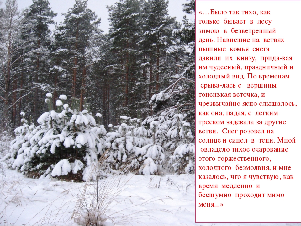 «…Было так тихо, как только бывает в лесу зимою в безветренный день....