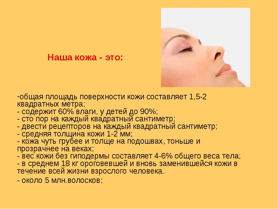 общая площадь поверхности кожи составляет 1,5-2 квадратных метра; - содержит...