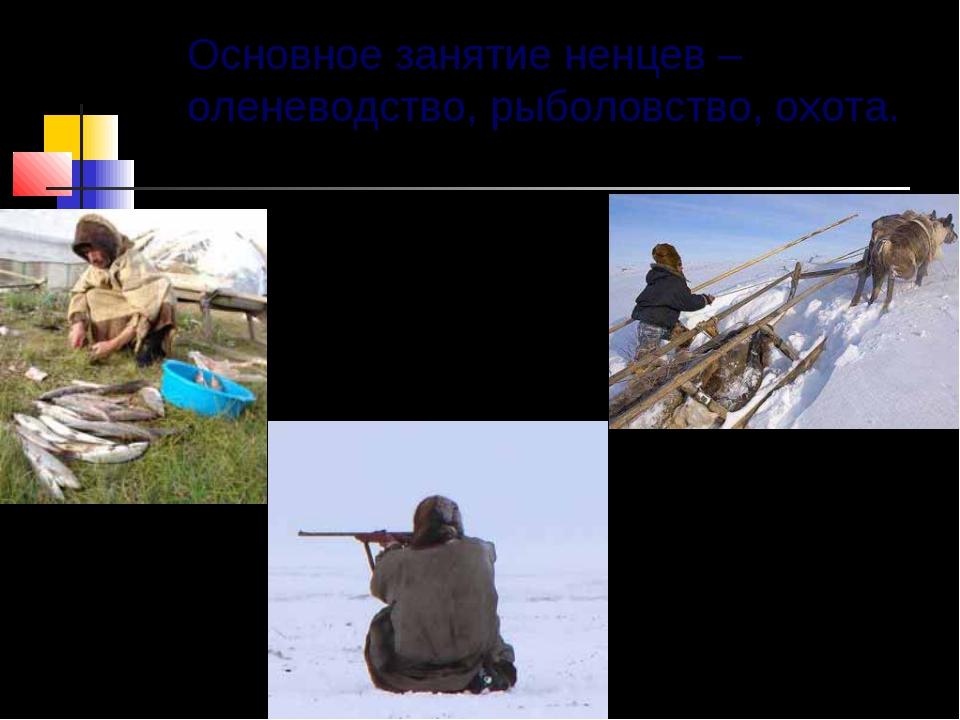 Основное занятие ненцев – оленеводство, рыболовство, охота.