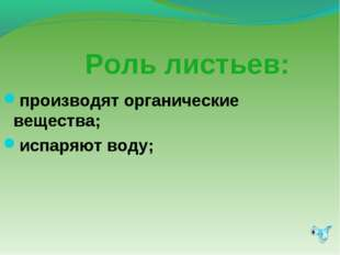 Роль листьев: производят органические вещества; испаряют воду;