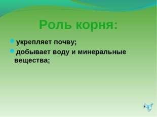 Роль корня: укрепляет почву; добывает воду и минеральные вещества;