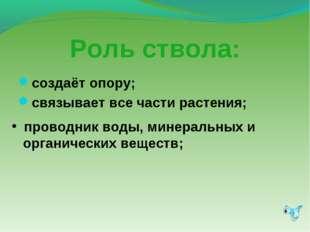 Роль ствола: создаёт опору; связывает все части растения; проводник воды, мин