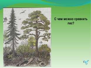 С чем можно сравнить лес?