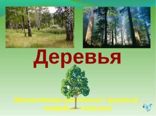 Деревья Многолетние растения с крупным, твёрдым стволом