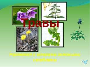 Травы Растения с мягкими зелеными стеблями