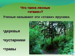 Ученые называют эти «этажи» ярусами. деревья кустарники травы Что такое лесны