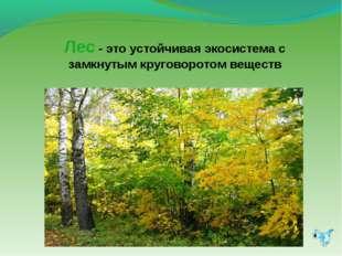 Лес - это устойчивая экосистема с замкнутым круговоротом веществ
