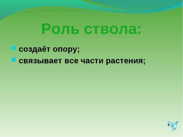 Роль ствола: создаёт опору; связывает все части растения;