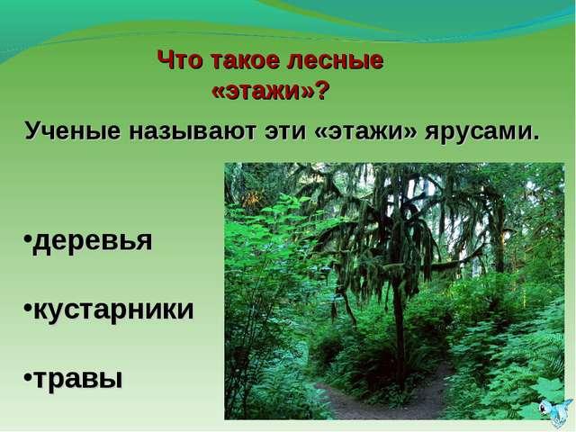 Ученые называют эти «этажи» ярусами. деревья кустарники травы Что такое лесны...