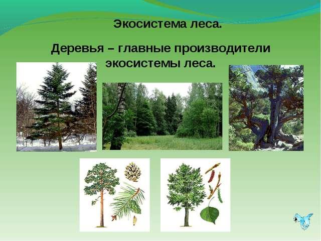 Экосистема леса.  Деревья – главные производители экосистемы леса.